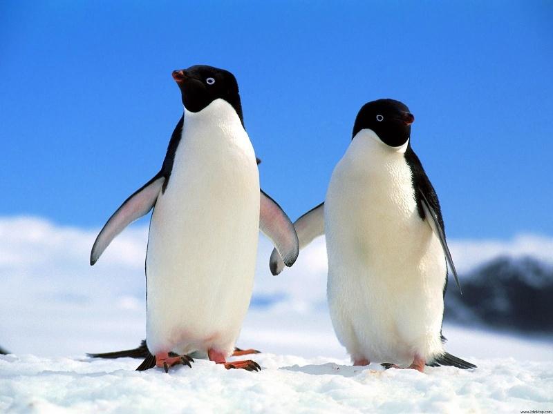 pingvin MASTERcateringICE